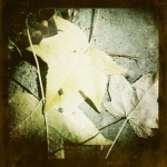 20111127-181808.jpg
