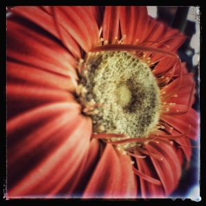 Fisheye Flower POV